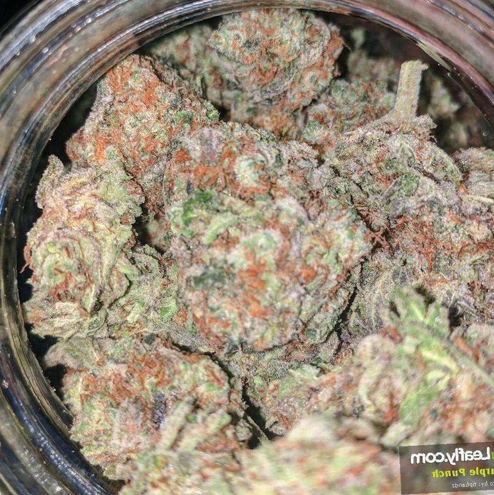 Purple Punch marijuana photo