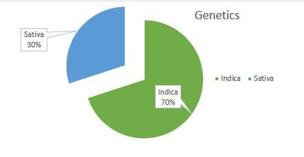 San Fernando Valley OG weed Strain genetics