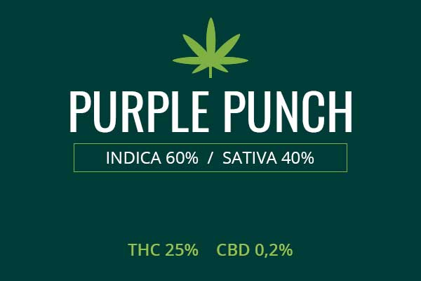 Marijuana Purple Punch Strain Review - NCSM