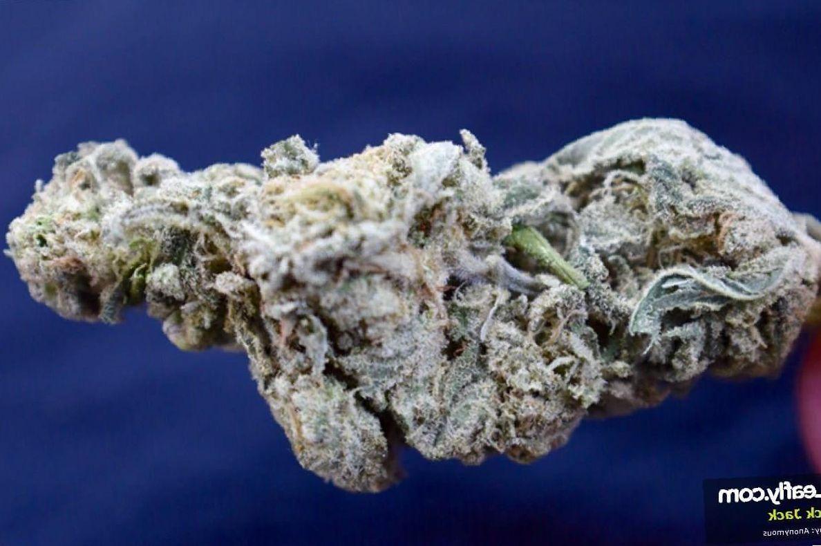 Black Jack marijuana photo