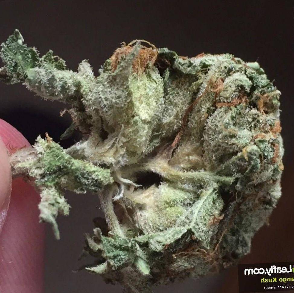 Mango Kush marijuana photo
