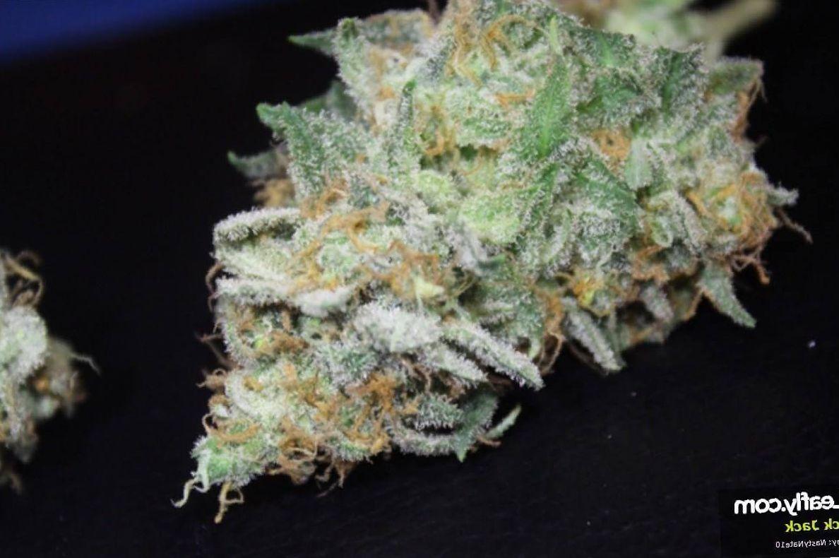 Black Jack cannabis growing