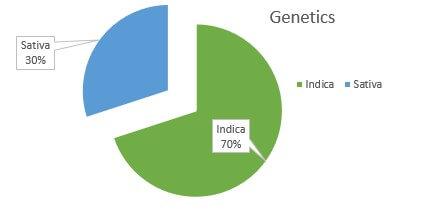 Black Jack weed Strain genetics