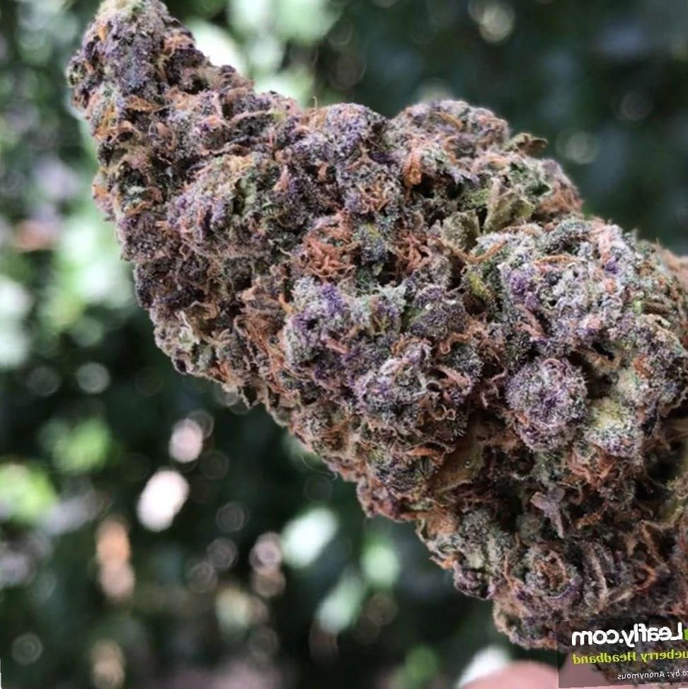 Blueberry Headband weed review